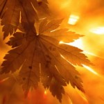 Fall-Thanksgiving-Maple-Leaf-sun-orange-300x235